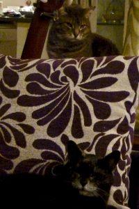 Bookwagon snuggled cats