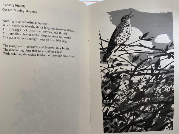 Watching the Swallows: A Book of Bird Poems insert